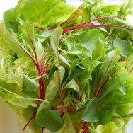 baby agrião, salada