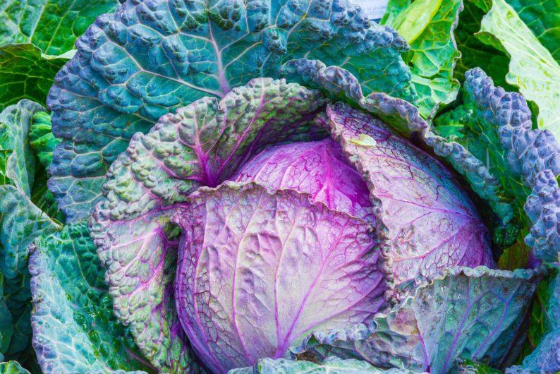 ingredientes para saladas saudáveis