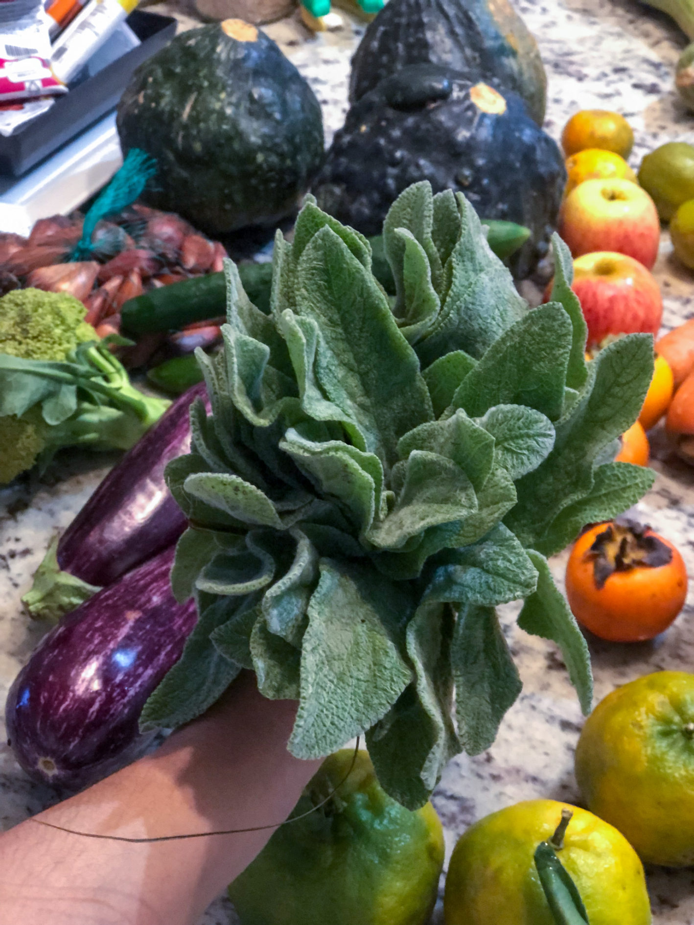 o que é um alimento orgânico