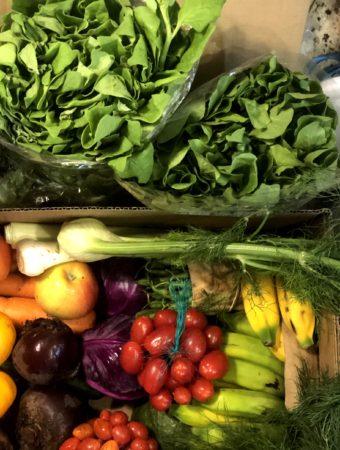 legumes e verduras organicos