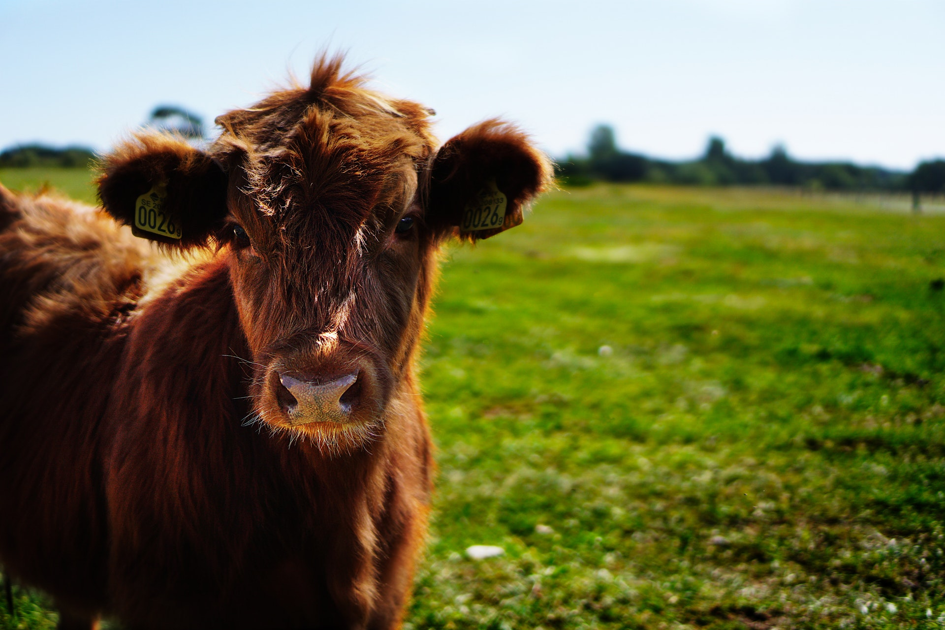 tudo sobre veganismo